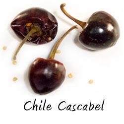 Chile cascabel